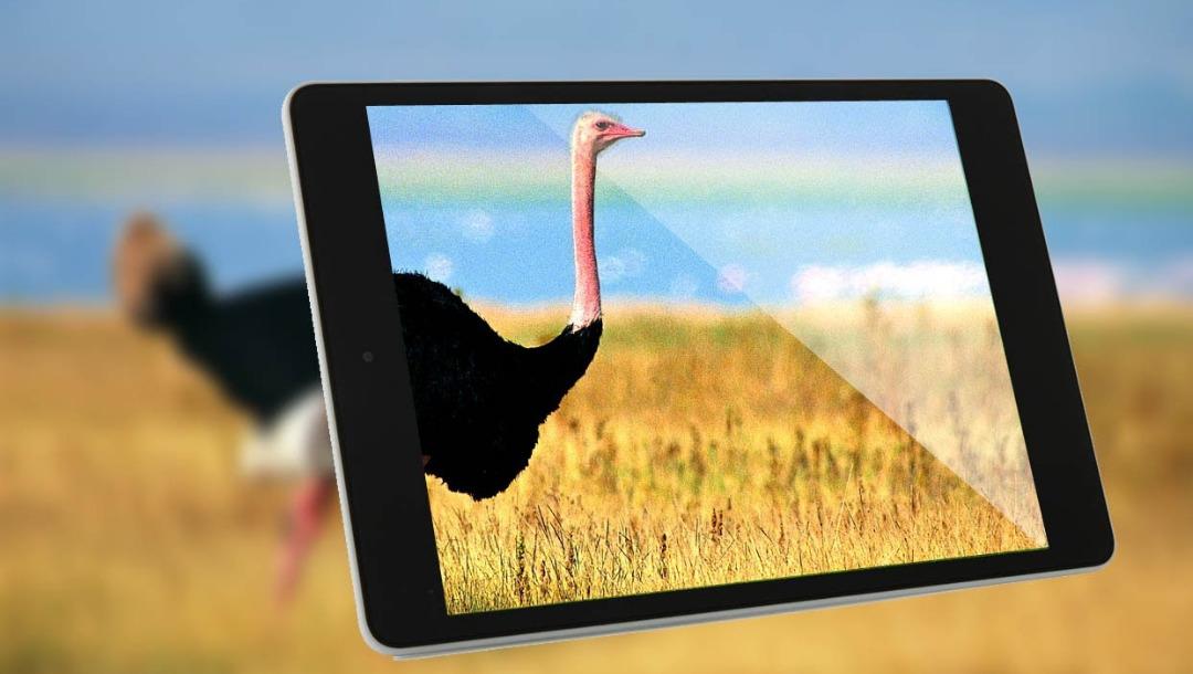 Xiaomi Mi Pad 211